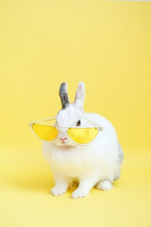 White Rabbit Wearing Yellow Eyeglasses - Riddles for Students